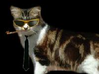 لعبة مغامرات القط وجمع العملات المعدنية