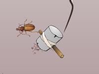لعبة حماية البيض من هجوم الصراصير