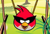 لعبة الطيور الغاضبة وحصد البيض